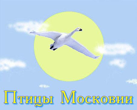 """"""",""""aves-moskovia.narod.ru"""